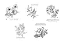 Free Coloring Pages: Floral & Comforting Verses