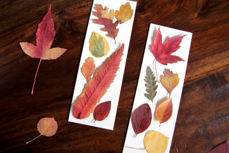 leaves arranged on bookmarks