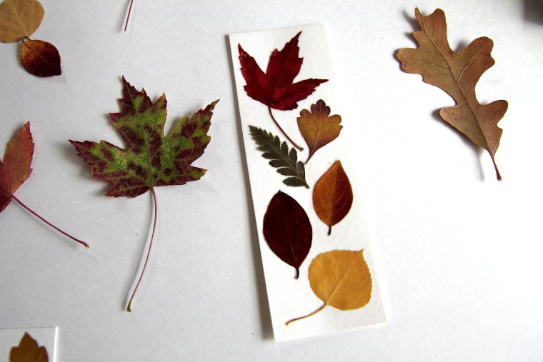 pressed fall leaves and bookmark