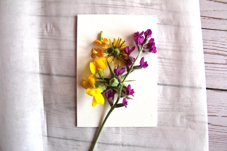 flower arranged on watercolor paper