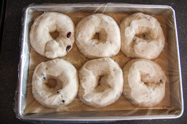 bagels shown after the long 12-hour proof in the refrigerator