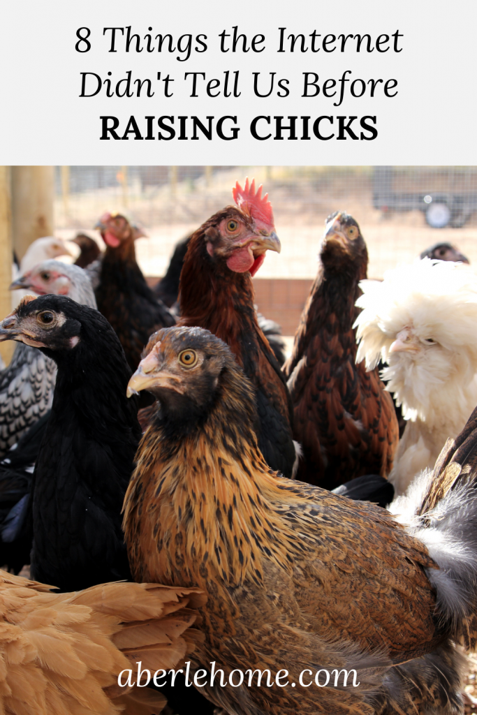 8 things the internet didn't tell us before raising chicks pinterest graphic
